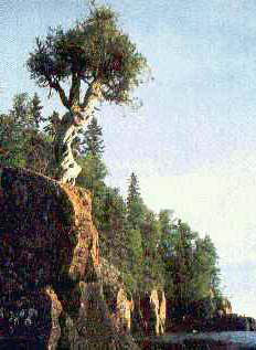 On the cliff at Hat Point, Minnesota, near the Grand Portage Ojibwe reservation, stands a 400-year-old sacred tree named Manido Giizhigance, (Little Cedar Tree Spirit)
